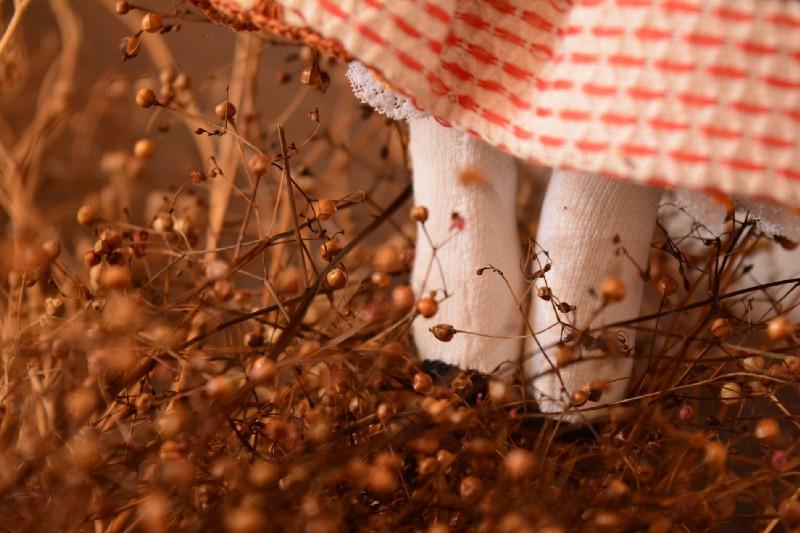 sementes de major gomes