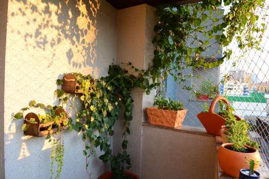 Bertalha em varanda