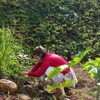 Um mini guia para começar a identificar e comer plantas espontâneas do quintal